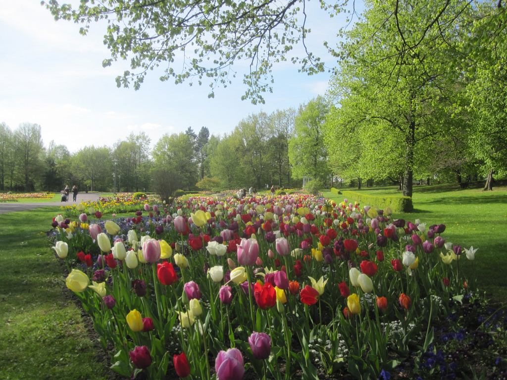 Blumenzwiebeln | Pflanzung & Pflege - Mein Garten Ratgeber
