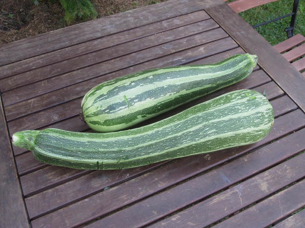 Zucchini Faulende Absterbende Früchte Mein Garten Ratgeber