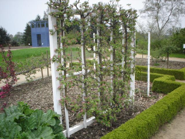 Garten Spalier war gut ideen für ihr haus ideen