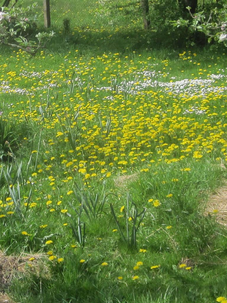 Berühmt Unkraut im Rasen - Mein Garten Ratgeber &AE_44