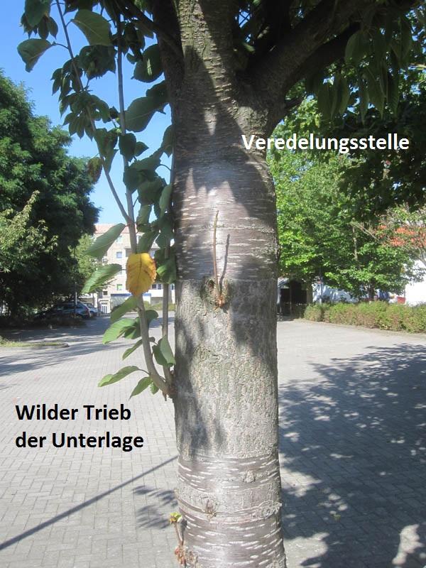 Super Wildtriebe - Mein Garten Ratgeber @WZ_67